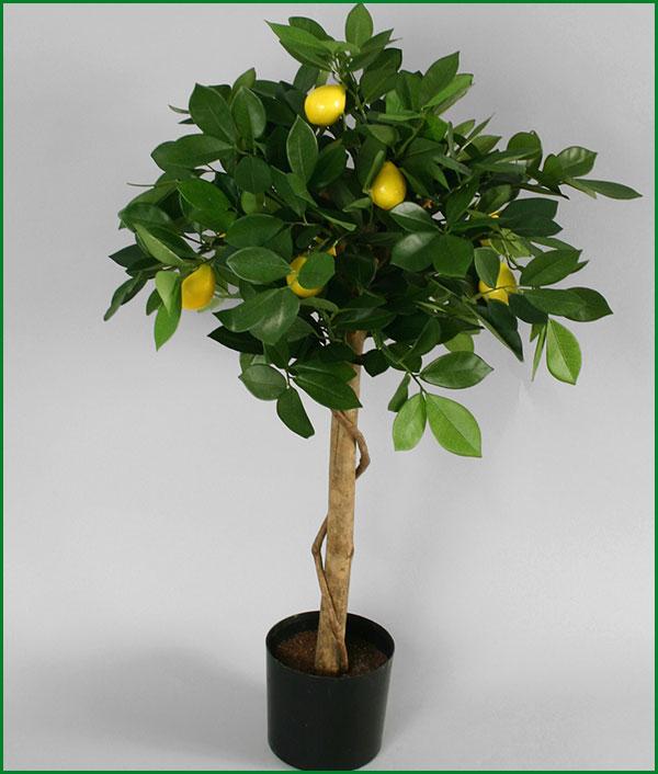 Домашний лимон уход в домашних условиях фото 241