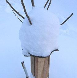 Как укрыть на зиму саженец вишни